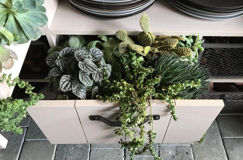 casa raizes triplex arquitetura casacor sao paulo 2018 suculentas vaso paisagismo arranjo flores plantas vegetação