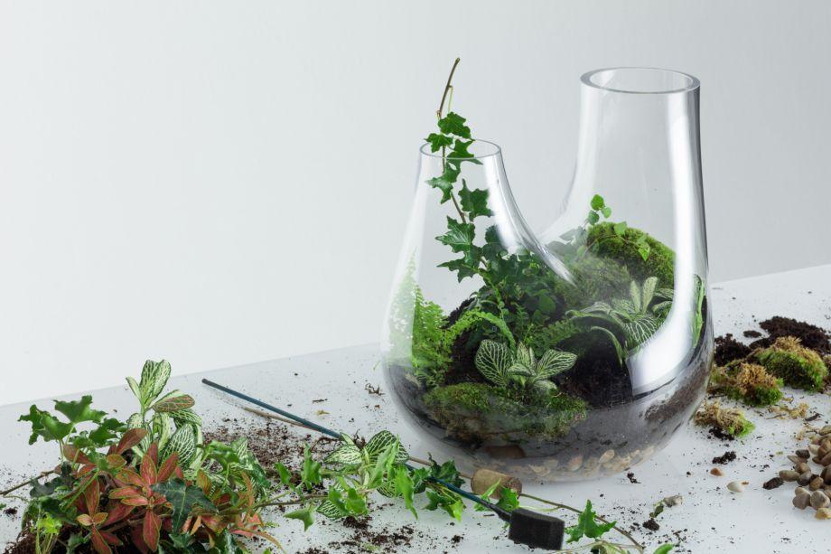 8. Limpe todo o excesso de terra ao redor do copo do recipiente e adicione uma pequena quantidade de água.