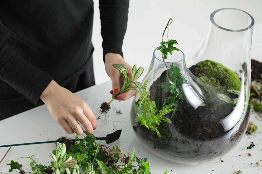 7. Continue colocando as plantas menores usando este método, tentando mantê-las afastadas das bordas.