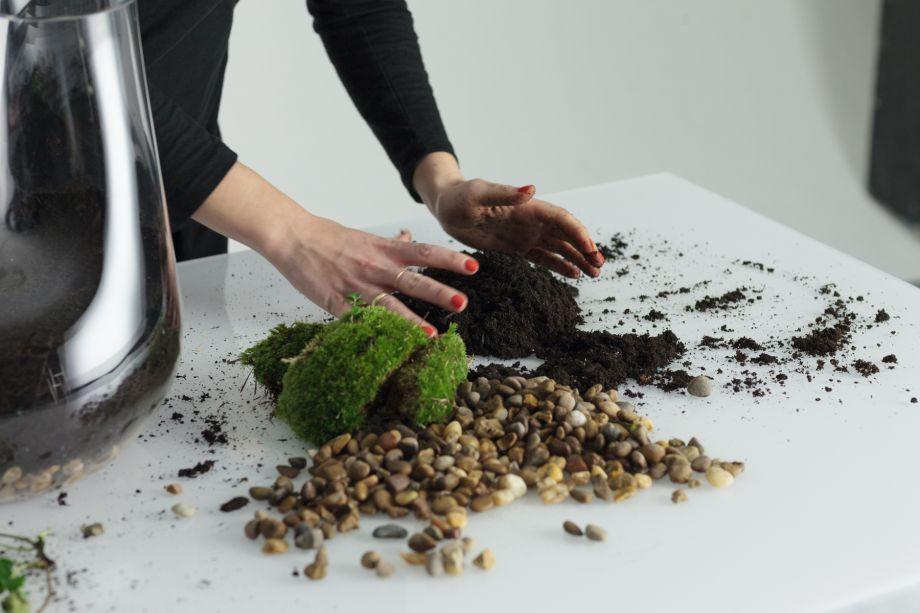 4. Retire a maior planta do seu recipiente e remova a terra das raízes. Se preferir, você pode querer cortar as raízes para que elas não fiquem muito longas.