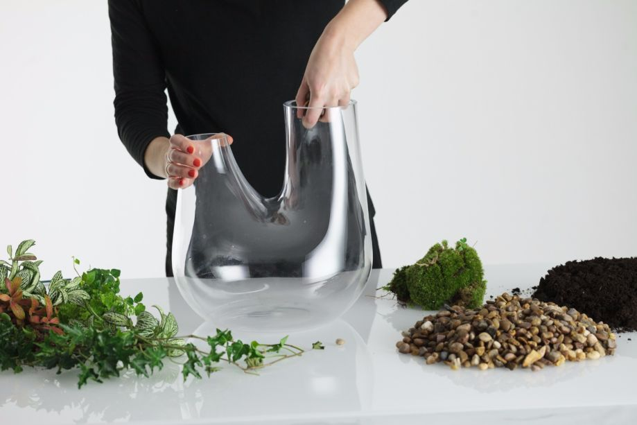 1. Limpe o interior do vaso para garantir que não haja resíduos que possam prejudicar a planta.