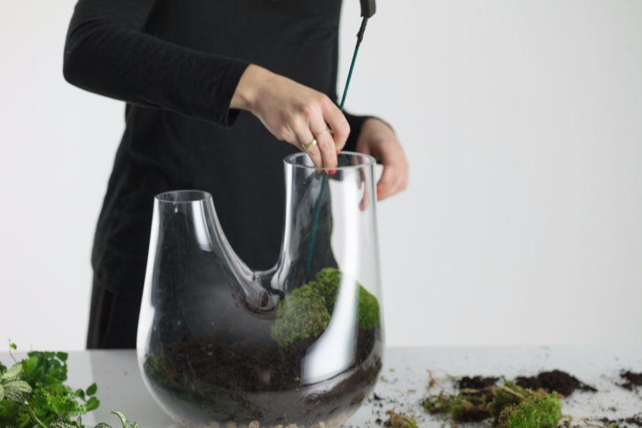 5. Faça um buraco na terra e acomode as raízes da planta maior dentro. Em seguida, aperte o solo com firmeza para manter a planta no lugar.