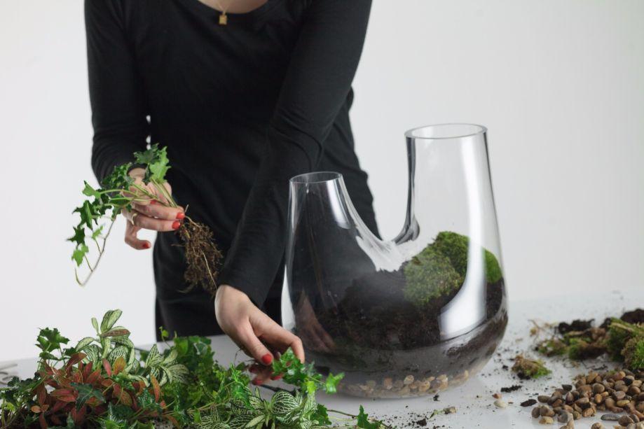 6. Coloque aproximadamente uma planta a cada polegada dentro do recipiente.
