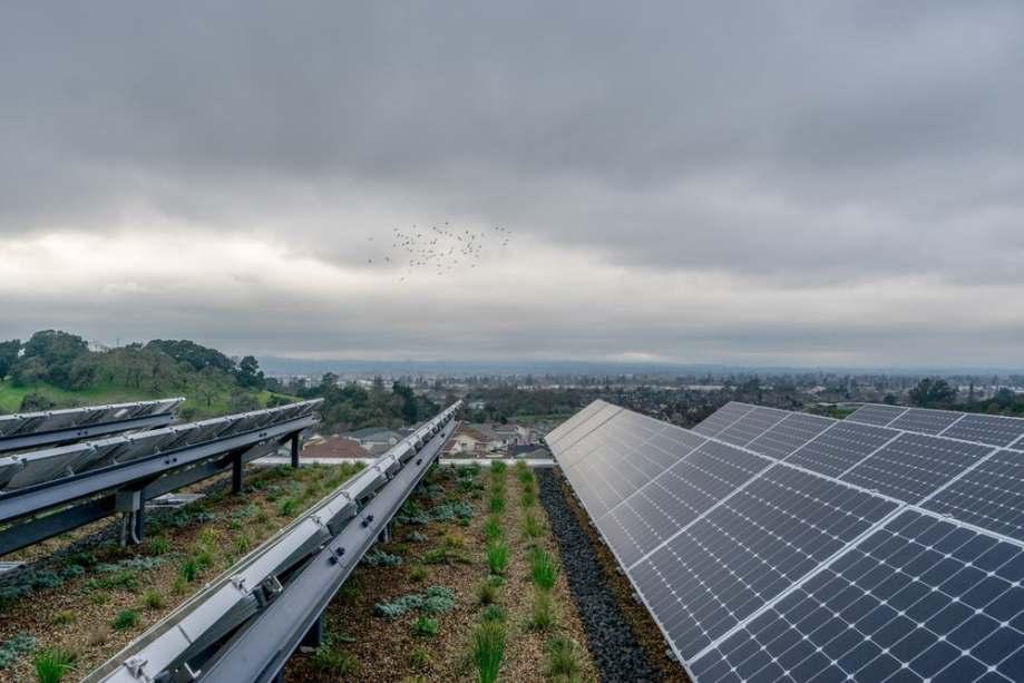 O telhado verde do edifício possui um jardim que respeita a ecologia logal e reforça a biodiversidade da paisagem escolar.