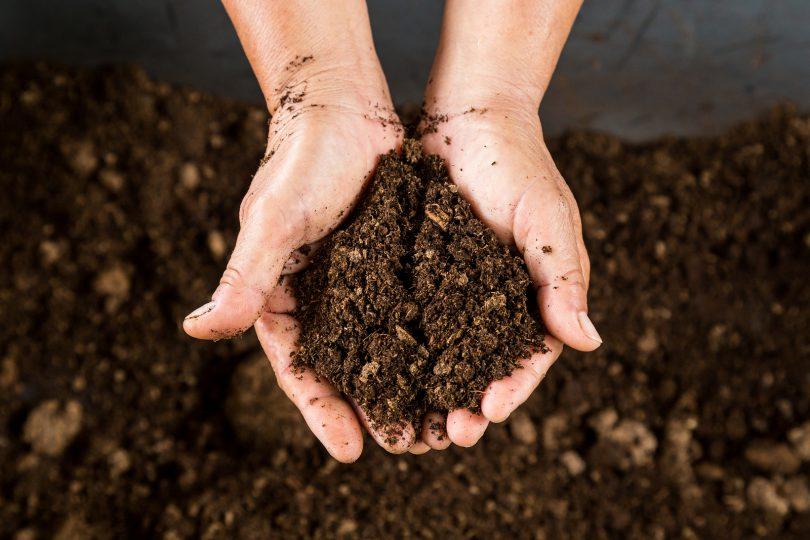 duas mãos segurando adubo de compostagem