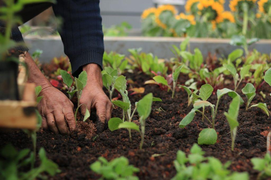 Homem mexendo na terra cultivando uma horta em casa