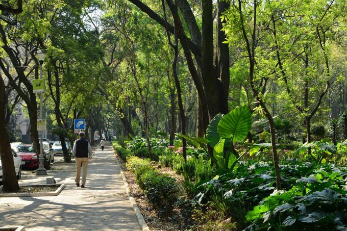 mexico_city_forest