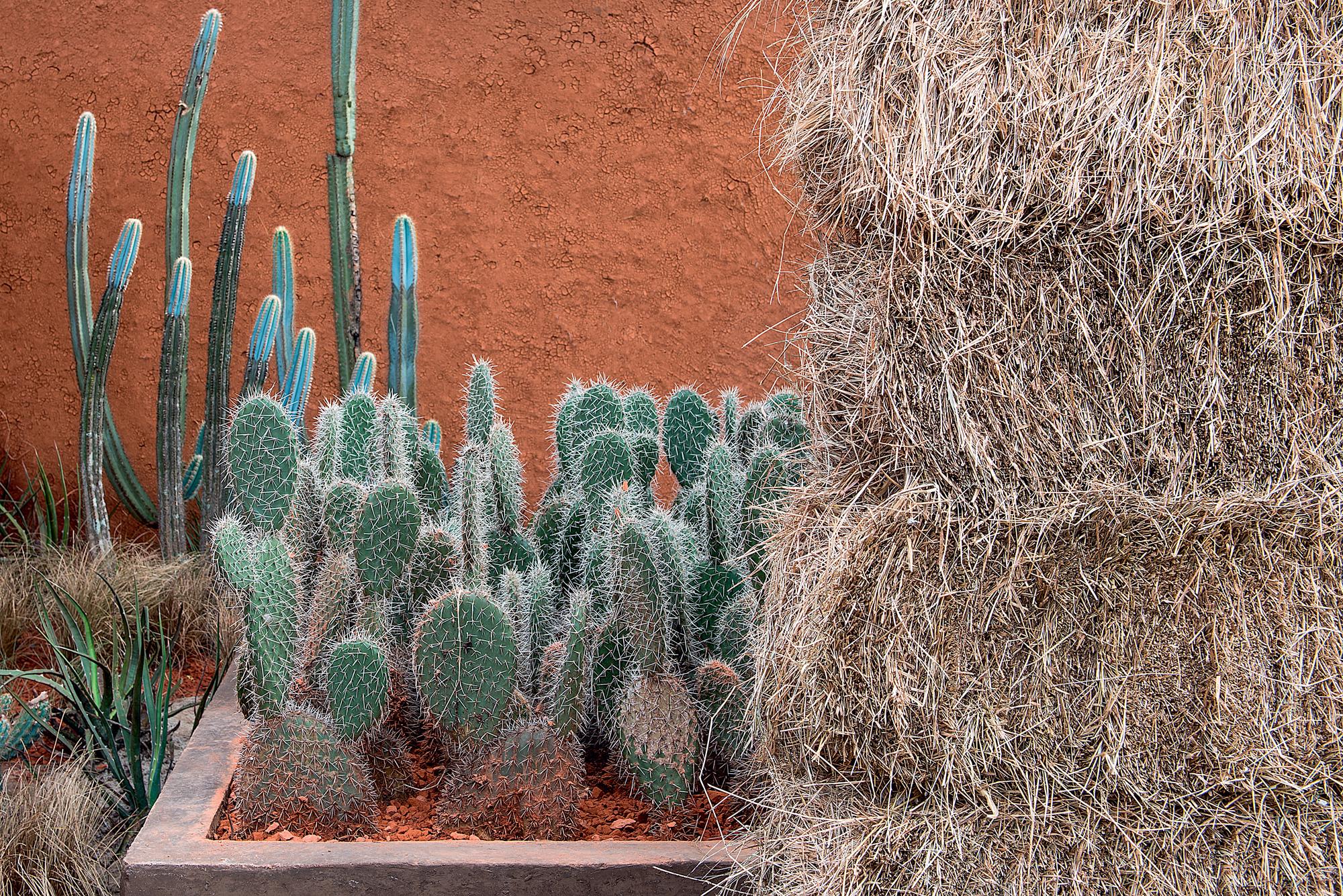 O paisagista Daniel Nunes homenageia a caatinga em uma paisagem árida e peculiar em seu Jardim Kariri para a CASACOR São Paulo. Cactos verdes e azuis foram pontuados de forma a traduzir esta essência de cheios e vazios da caatinga.