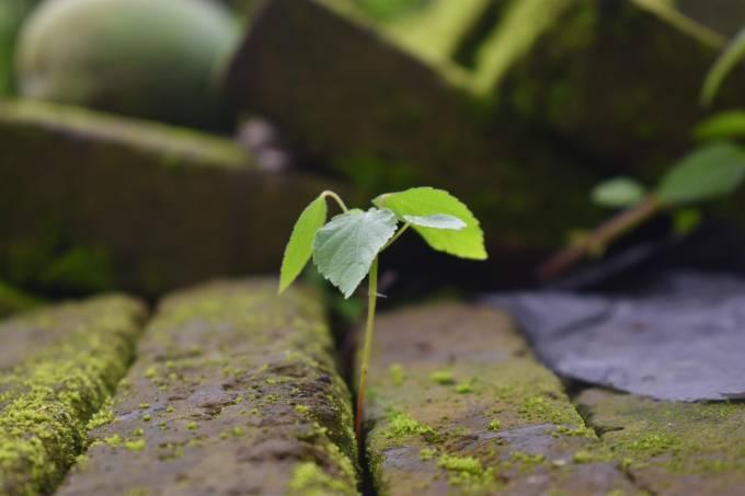 dia-mundial-do-meio-ambiente