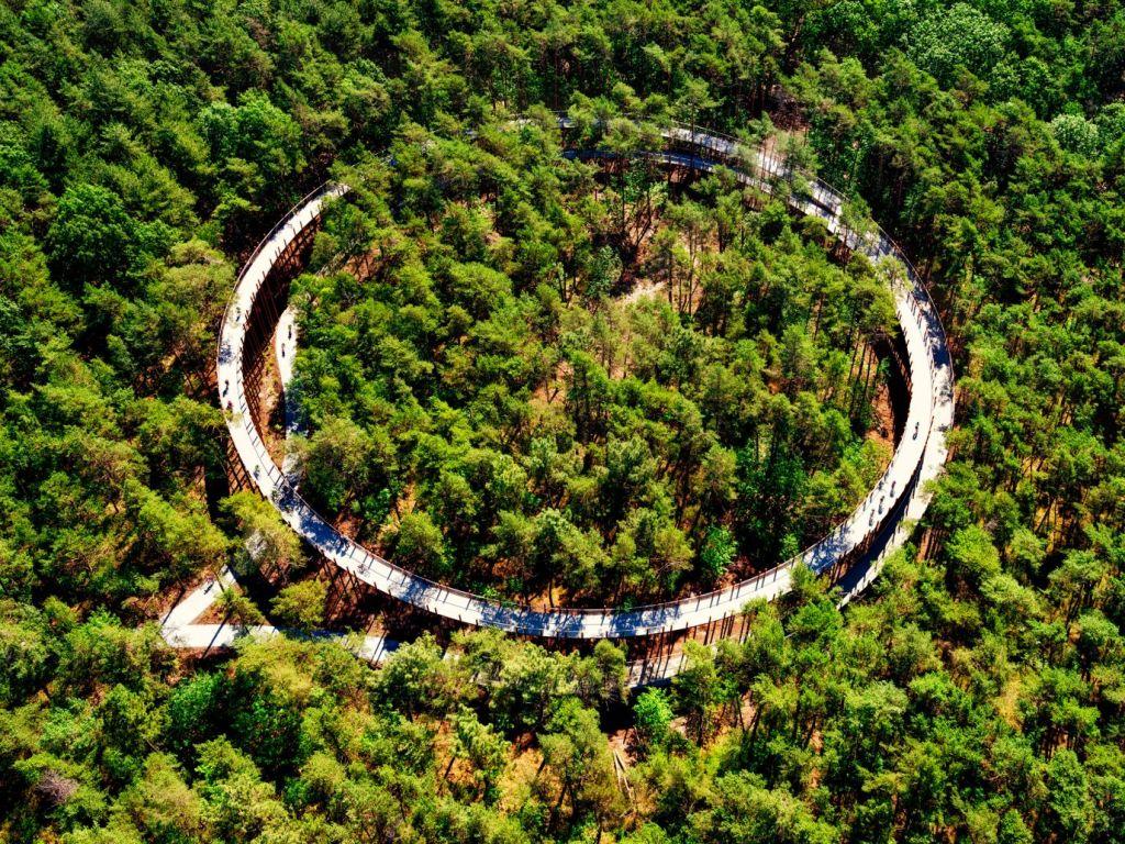 Vista aérea da ciclovia no meio da floresta na Bélgica.