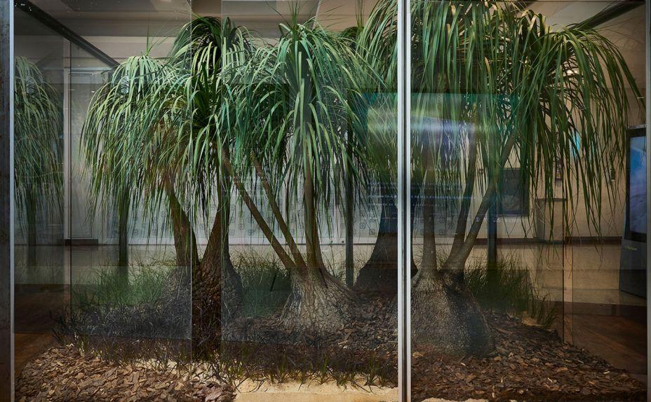 Vitrine Jardim 360º - Carol Quinan. O projeto apresenta uma minuciosa escolha das mudas ornamentais, com peças esculturais resistentes e raras de Nolina, mais conhecida como Pata de Elefante, e Capim do Texas, compondo um paisagismo contemporâneo e exuberante.