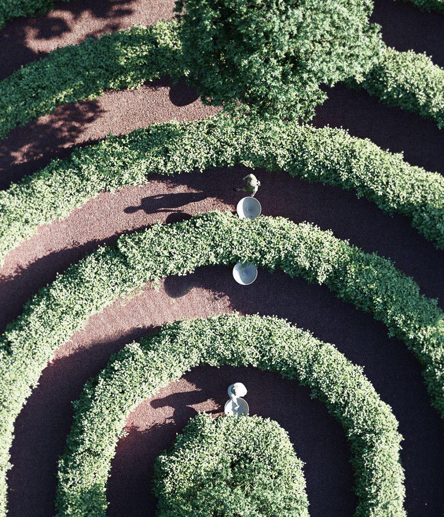 Imagem renderizada em detalhe dos caminhos delimitados por arbustos
