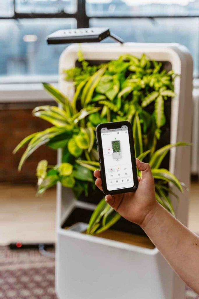 Horta inteligente purifica o ar de ambientes internos - Na imagem é possível ver um celular com o aplicativo de monitoramento.
