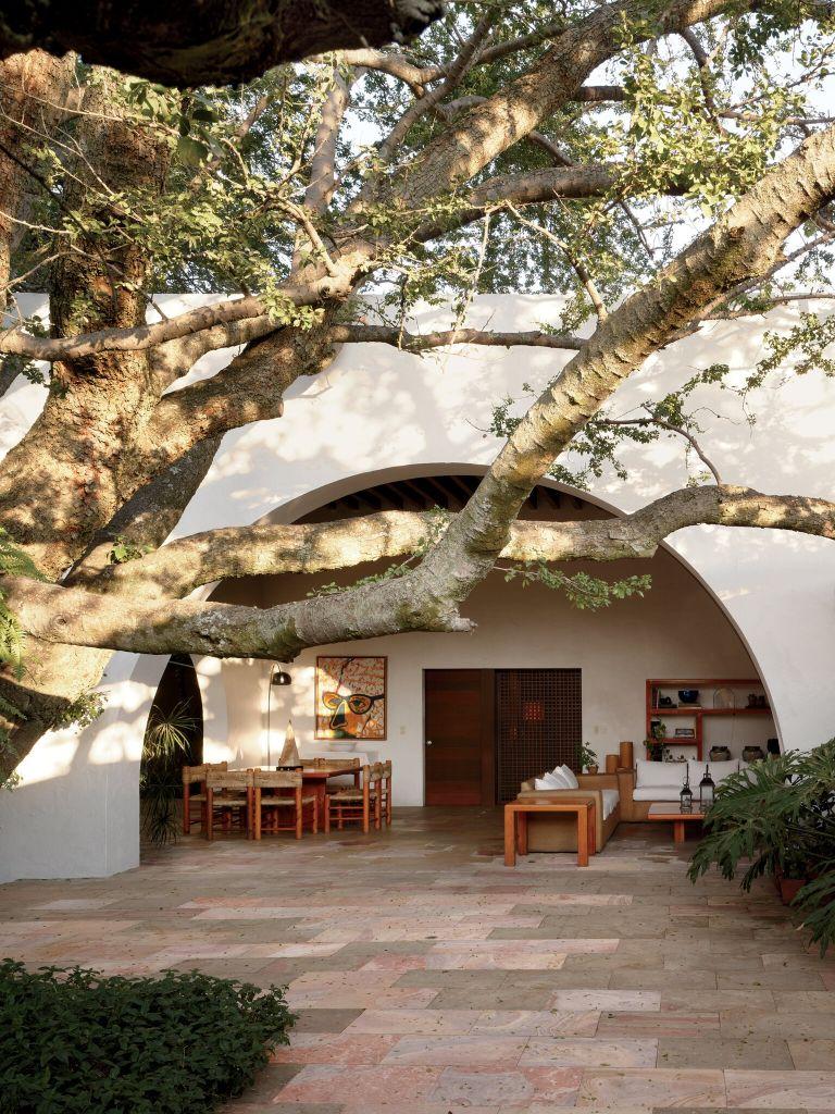 Uma árvore nativa de guamúchil no pátio de calcário da Casa Padilla de Hugo Gonzalez, em 1989, na cidade mexicana de Zapopan.