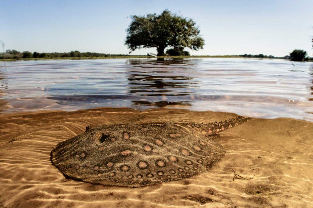 pantanal preservação documenta pantanal leilão obra de arte
