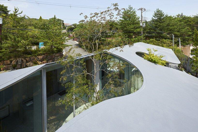 telhado deixa arvores crescerem