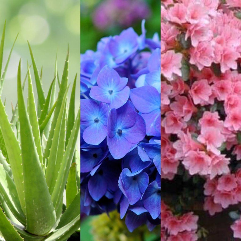capa com flores de inverno contendo babosa, hortensias
