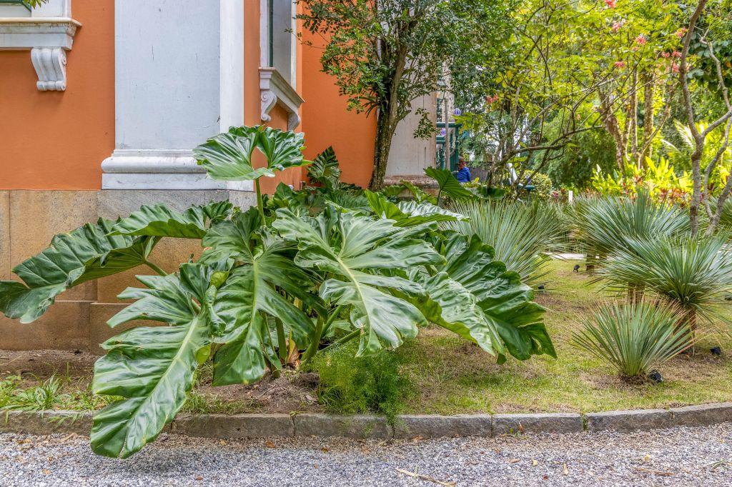 costela de Adão; plantas; jardim; casacor rio