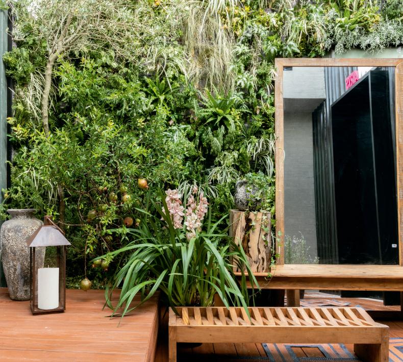 plantas purificar ambientes