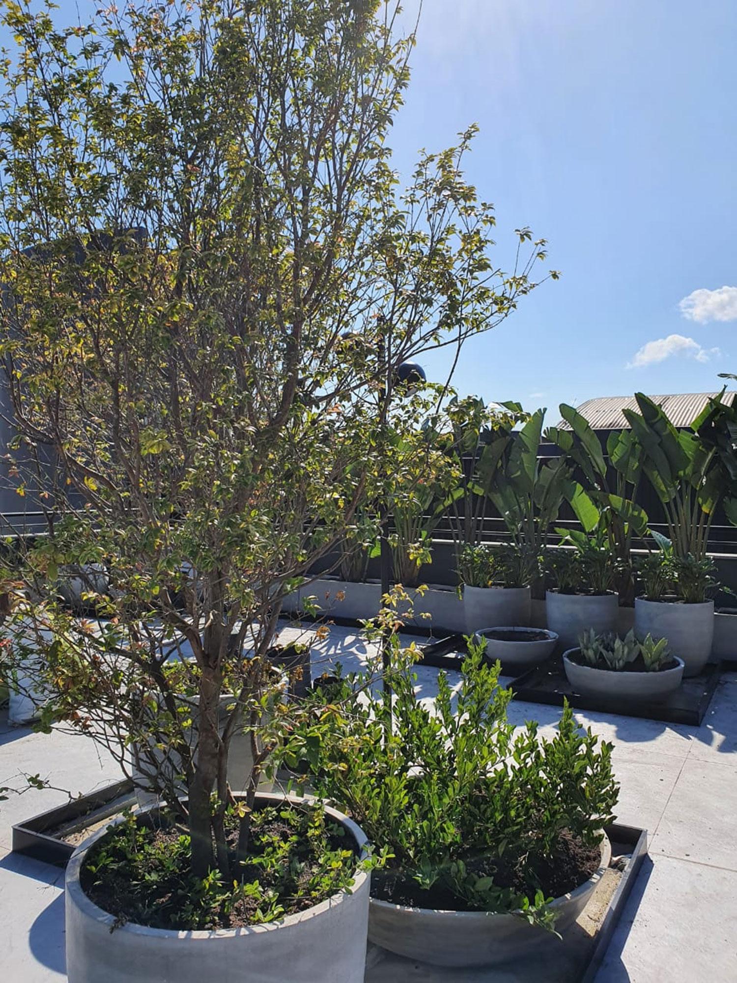 Ana-Trevisan-Rooftop-casacor-santa-catarina-florianopolis-2021