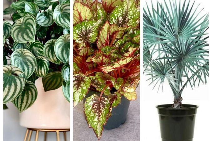 plantas-diferentes (1)