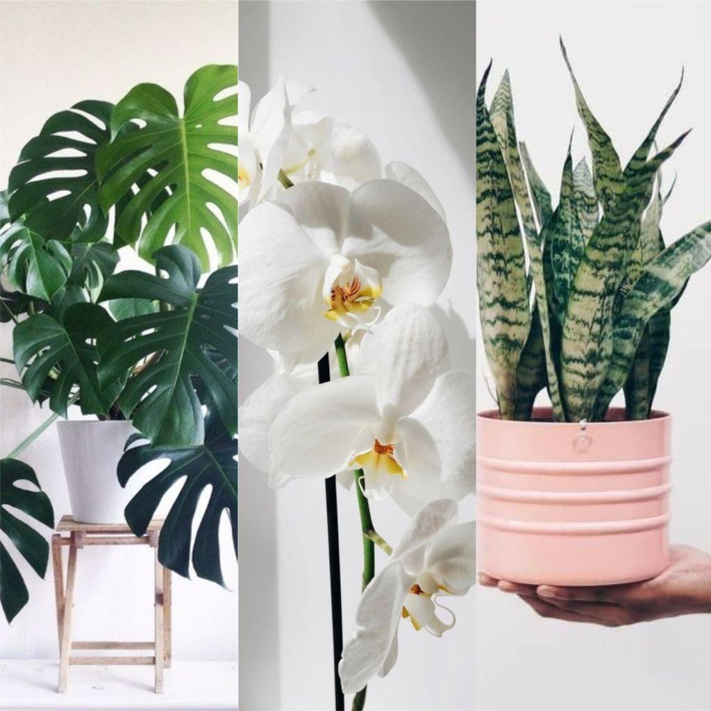 Plantas para dar de presente