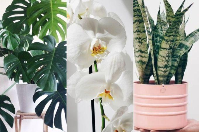 plantas-para-dar-de-presente
