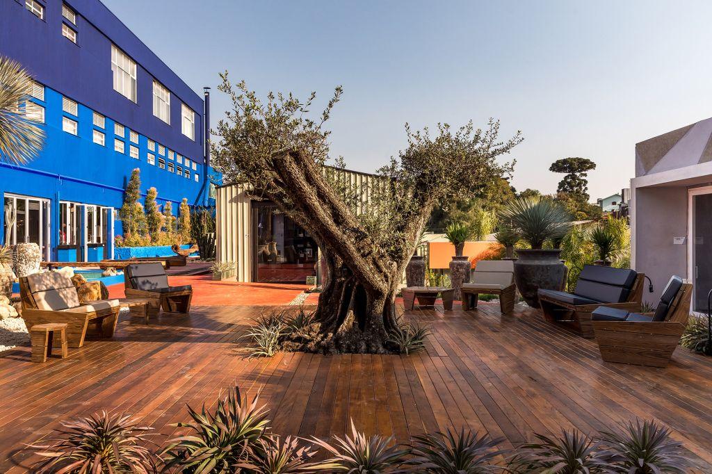 Jardim da Verdade Thiago Zoller CASACOR Paraná 2021 oliveira paisagismo cacto decoração plantas