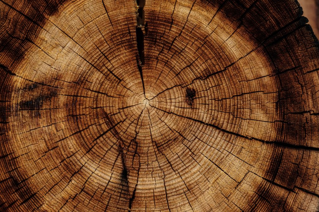 evento online imaflora; sustentabilidade; madeira ilegal; arquitetos; designers;